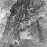 Albert Bierstadt (1830-1902)  Study of a Tree  Oil on paper mounted on board, 1864  9 1/4 x 7 3/4 inches (23.5 x 20 cm)  Private collection