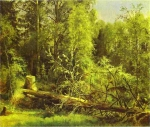Ivan Ivanovich Shishkin (1832 – 1898)   A fallen tree.  Oil on canvas