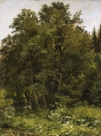 Ivan Ivanovich Shishkin (1832 – 1898)   At the edge.   Oil on canvas, 1885   70.8 x 53 cm